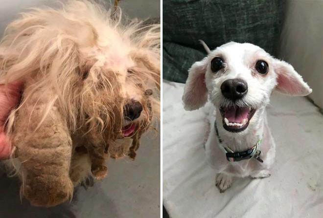 Sự lột xác bất ngờ của 16 chú chó trước và sau khi về với chủ mới - Ảnh 11.