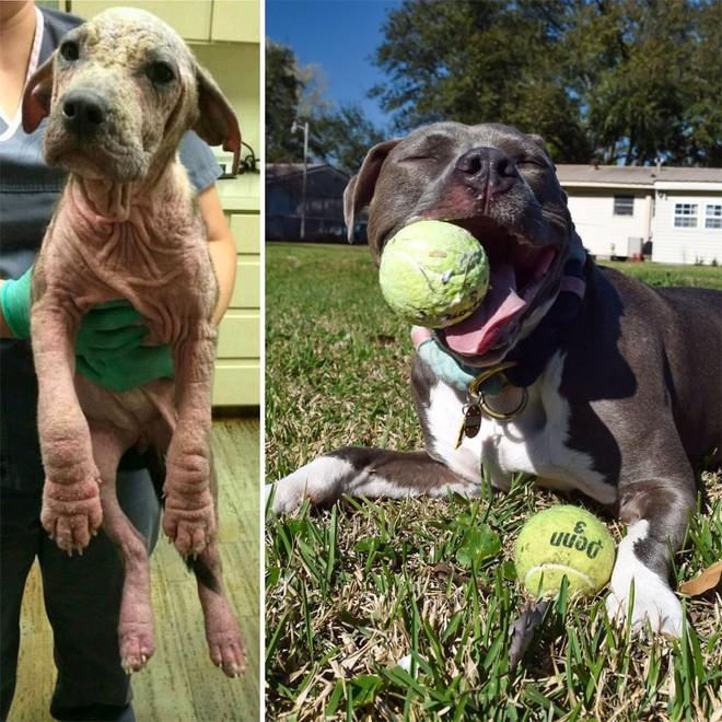 Sự lột xác bất ngờ của 16 chú chó trước và sau khi về với chủ mới - Ảnh 13.