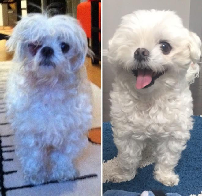 Sự lột xác bất ngờ của 16 chú chó trước và sau khi về với chủ mới - Ảnh 15.