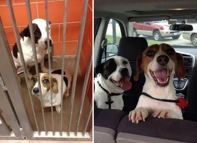 Sự lột xác bất ngờ của 16 chú chó trước và sau khi về với chủ mới - Ảnh 5.