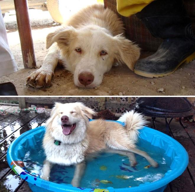 Sự lột xác bất ngờ của 16 chú chó trước và sau khi về với chủ mới - Ảnh 6.