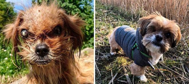 Sự lột xác bất ngờ của 16 chú chó trước và sau khi về với chủ mới - Ảnh 7.