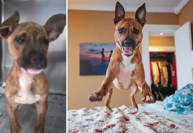 Sự lột xác bất ngờ của 16 chú chó trước và sau khi về với chủ mới - Ảnh 8.