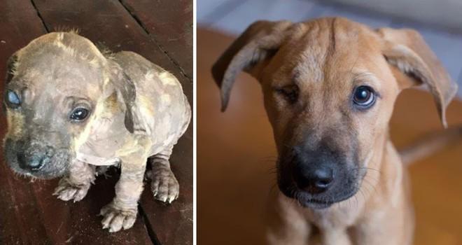 Sự lột xác bất ngờ của 16 chú chó trước và sau khi về với chủ mới - Ảnh 9.