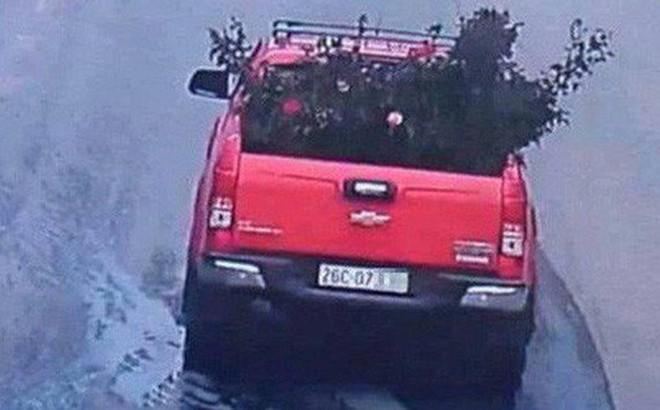 Công an trích xuất camera truy tìm chiếc xe ô tô vào vườn trộm cây hoa hồng cổ gần 20 tuổi