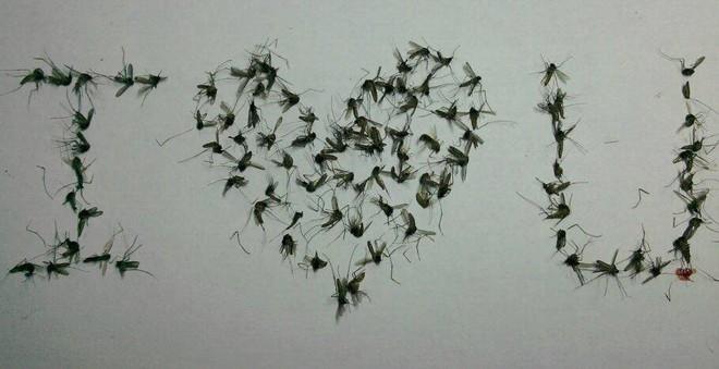 Hè gần tới, những nhà sưu tập muỗi khoe chiến lợi phẩm trên MXH - Ảnh 2.
