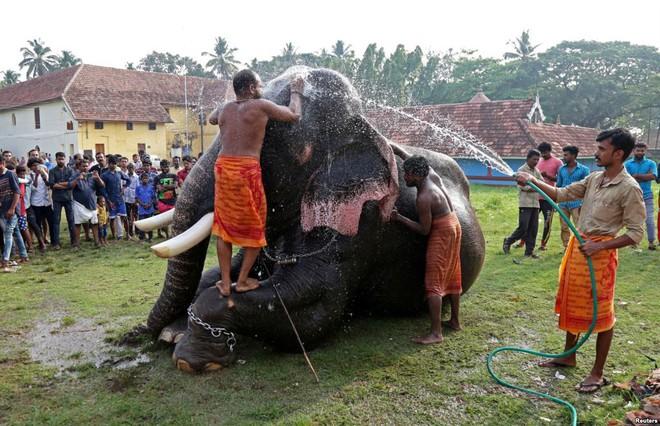 24h qua ảnh: Sốc với hổ mang chúa khổng lồ chưa từng thấy ở Indonesia - Ảnh 4.
