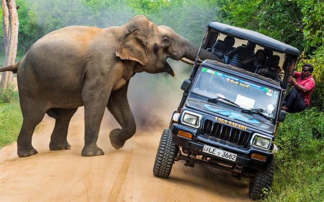 24h qua ảnh: Sốc với hổ mang chúa khổng lồ chưa từng thấy ở Indonesia - Ảnh 1.