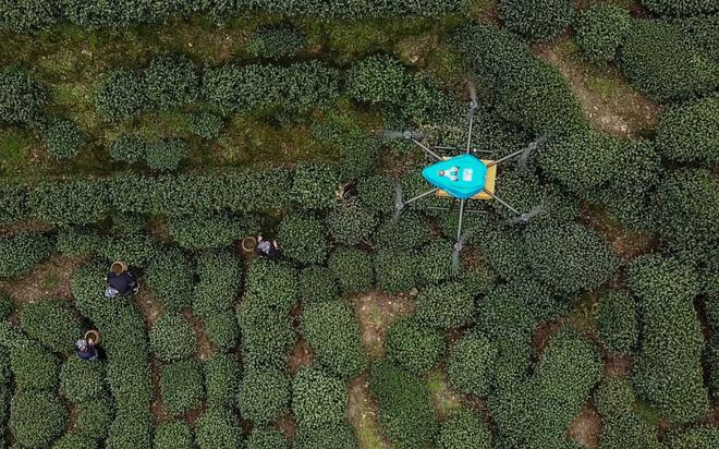 24h qua ảnh: Sốc với hổ mang chúa khổng lồ chưa từng thấy ở Indonesia - Ảnh 5.