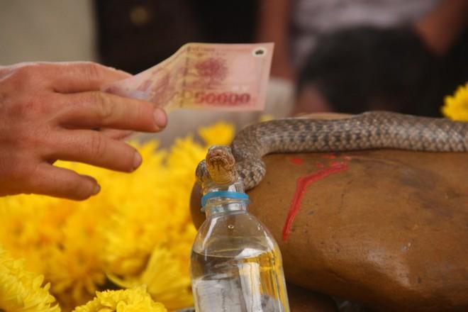 TIN TỐT LÀNH 5/3: Niềm vui của con rắn lỡ làm thần và nhiều quan bị vinh danh - Ảnh 1.