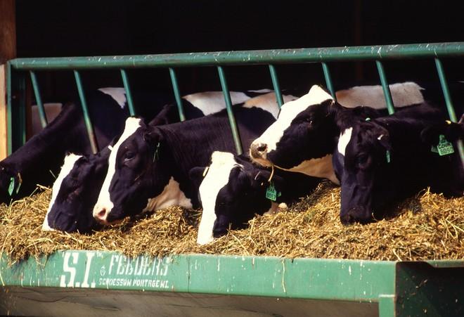 Sữa bò có thực sự là nguyên nhân gây ung thư? Đừng nghe lời đồn, hãy nghe chuyên gia nói - Ảnh 2.