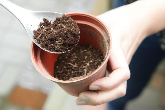 Các nhà khoa học khẳng định: Bã cà phê là một bảo bối, đừng bỏ lỡ 7 cách dùng hữu ích - Ảnh 6.