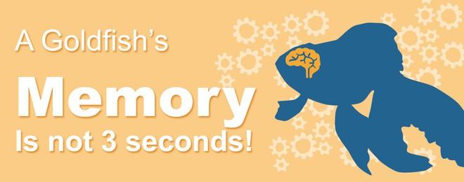 Sự thật đằng sau bí ẩn não cá vàng chỉ nhớ được 3 giây - Ảnh 1.
