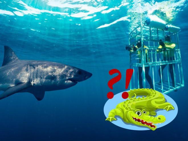 Hỏi khó: Từ lâu chúng ta đã lặn biển cùng cá mập, nhưng với... cá sấu thì sao? - Ảnh 1.