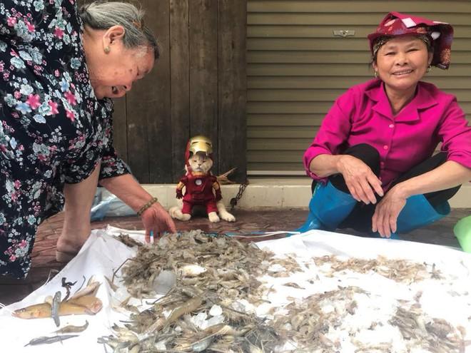 Chó xuất hiện trong hình ảnh mới khiến dân mạng Việt không ngừng xuýt xoa - Ảnh 1.