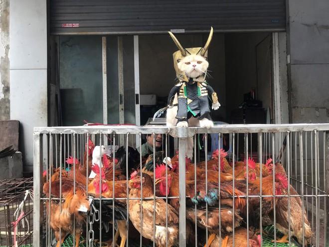 Chó xuất hiện trong hình ảnh mới khiến dân mạng Việt không ngừng xuýt xoa - Ảnh 6.