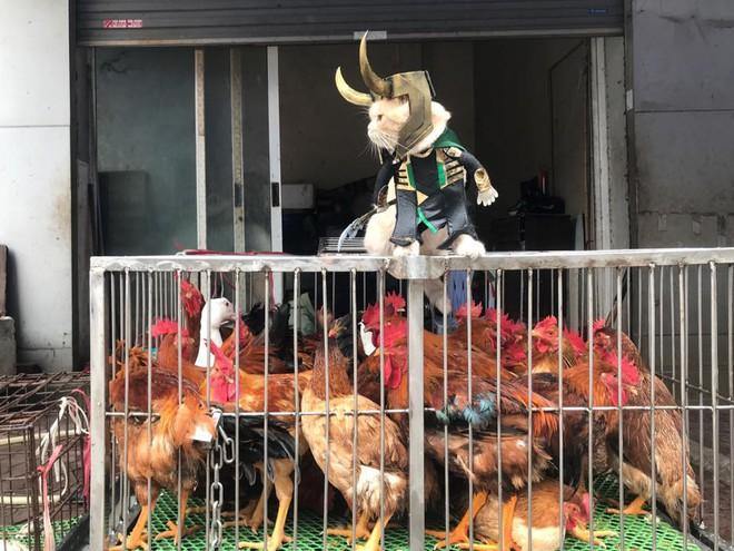 Chó xuất hiện trong hình ảnh mới khiến dân mạng Việt không ngừng xuýt xoa - Ảnh 5.