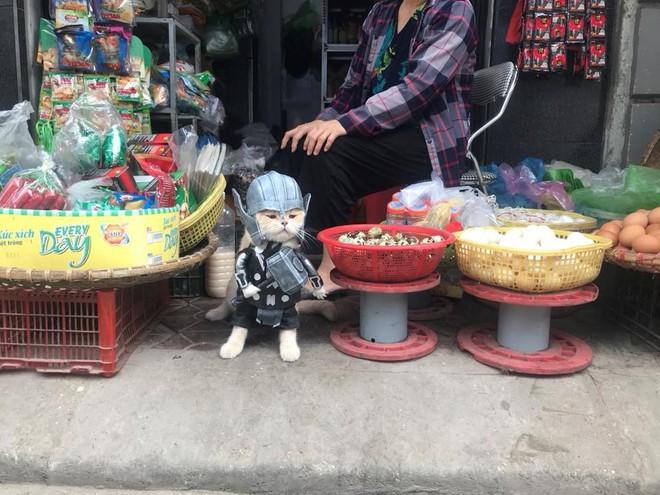 Chó xuất hiện trong hình ảnh mới khiến dân mạng Việt không ngừng xuýt xoa - Ảnh 4.