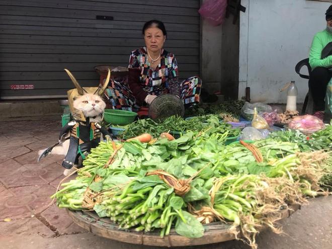 Chó xuất hiện trong hình ảnh mới khiến dân mạng Việt không ngừng xuýt xoa - Ảnh 7.