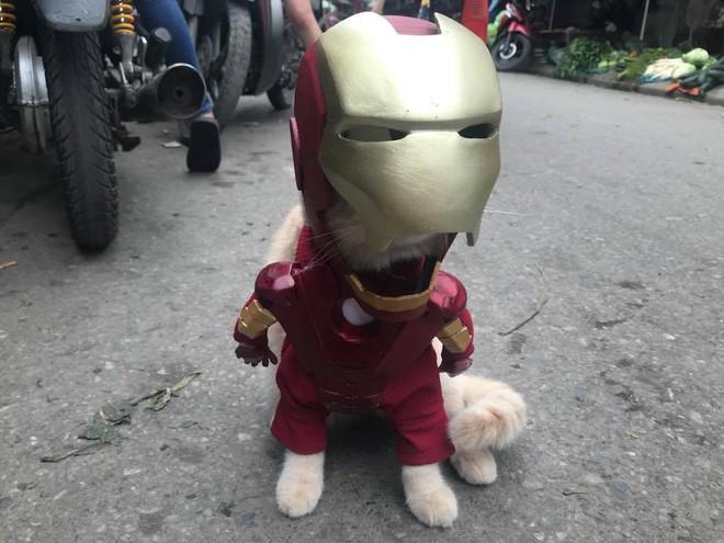 Chó xuất hiện trong hình ảnh mới khiến dân mạng Việt không ngừng xuýt xoa - Ảnh 3.