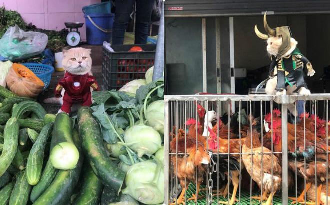 Chó xuất hiện trong hình ảnh mới khiến dân mạng Việt không ngừng xuýt xoa