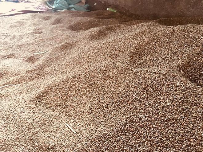 Đã xác định mục đích làm cà phê nhuộm pin - Ảnh 1.