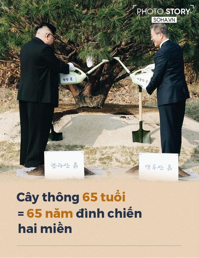[PHOTO STORY] Xung quanh cây thông gắn kết Tổng thống Hàn Quốc Moon Jae-in và lãnh đạo Triều Tiên Kim Jong-un - Ảnh 1.
