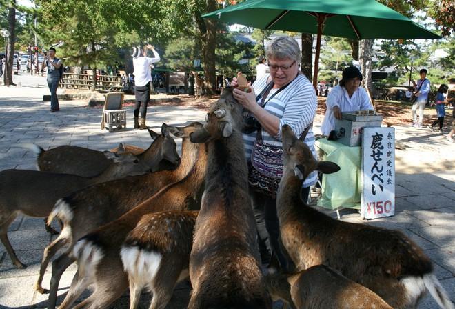 Hơn 200 vụ hươu cắn khách du lịch ở công viên Nhật Bản, chính quyền phải gấp rút ra bản hướng dẫn cho hươu ăn an toàn - Ảnh 5.