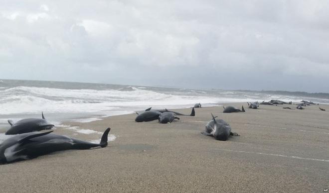 24h qua ảnh: Hàng chục con cá voi mắc cạn bí ẩn trên bờ biển New Zealand - Ảnh 3.