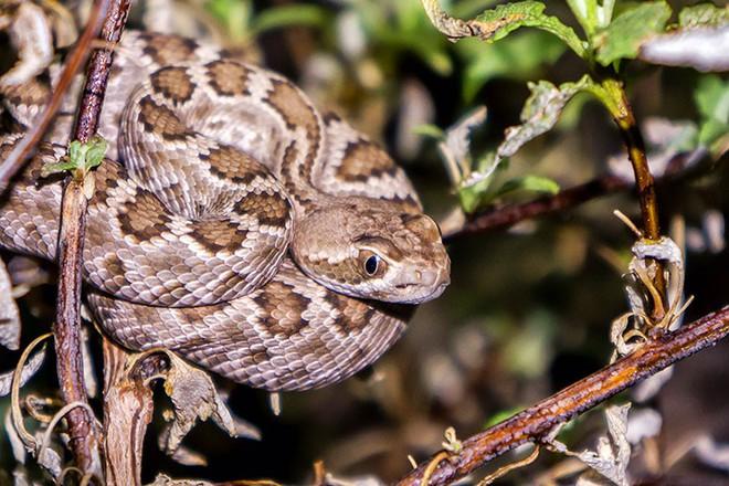 Xâm nhập lãnh địa bầy rắn độc: Không ngờ đụng độ tử thần ngay trong đêm - Ảnh 9.