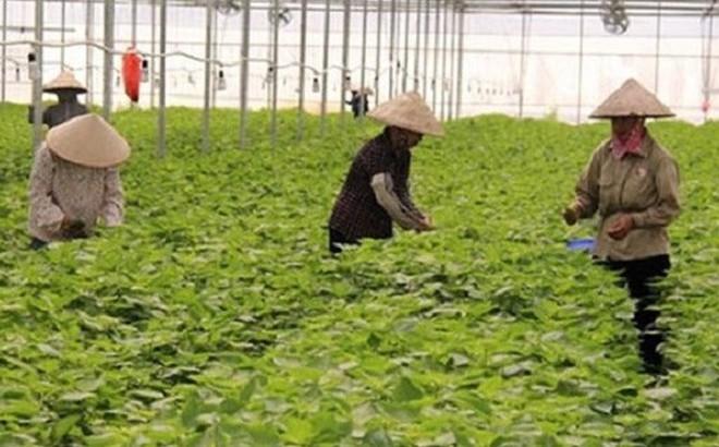 """Những nông sản Việt được bán với giá cao đến """"khó tin"""" trên thế giới"""