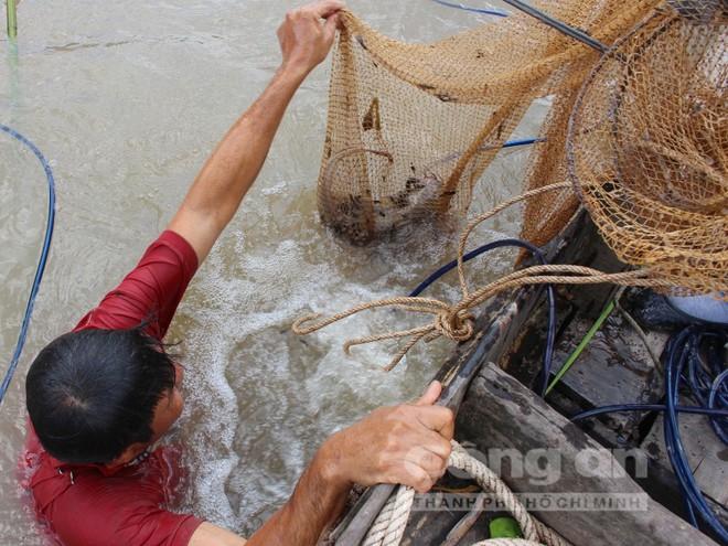'Vua' săn cá ngát trên sông Hàm Luông - Ảnh 3.