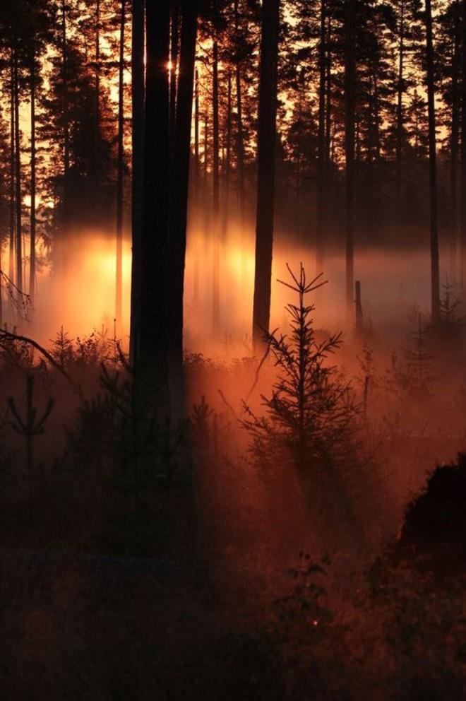 Đi rừng mà lạc vào khu vực này, có thể đột tử ngay tức khắc! - Ảnh 1.