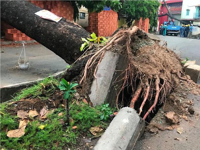 Mưa kèm gió mạnh ở Sài Gòn làm sập mái nhà, cây xanh ngã đè xe tải - Ảnh 1.