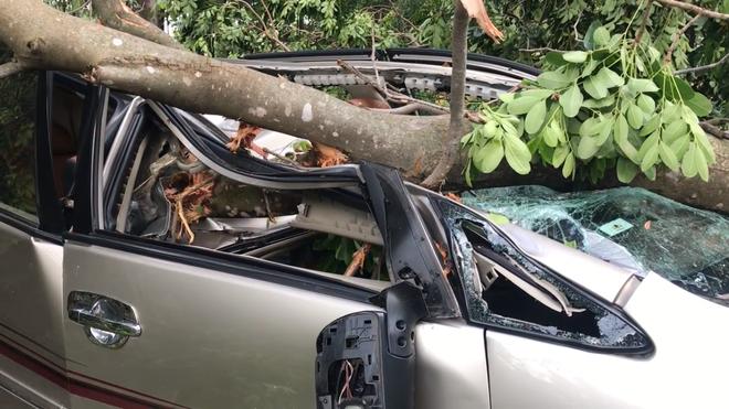 Ô tô đang chạy bị cây xanh ngã đè bẹp, tài xế thoát chết   - Ảnh 1.