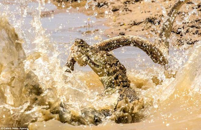Sở hữu nọc độc chết người, rắn hổ bướm ác chiến cá sấu dưới hồ nước - Ảnh 3.