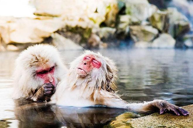 Những bức ảnh siêu hài hước về động vật đầu năm 2018 - Ảnh 3.