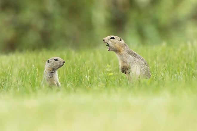 Những bức ảnh siêu hài hước về động vật đầu năm 2018 - Ảnh 7.