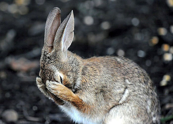 Những bức ảnh siêu hài hước về động vật đầu năm 2018 - Ảnh 8.