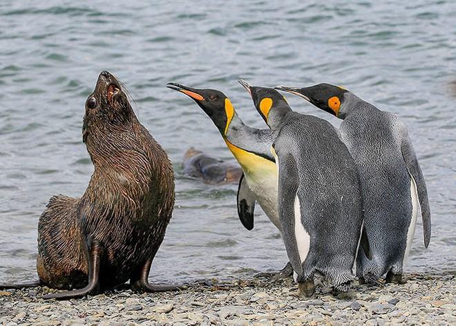 Những bức ảnh siêu hài hước về động vật đầu năm 2018 - Ảnh 10.