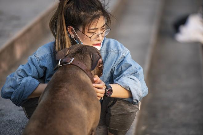 Nhiều người đưa chó cưng ra Hồ Tây cùng tắm để giải nhiệt ngày nắng nóng - Ảnh 9.