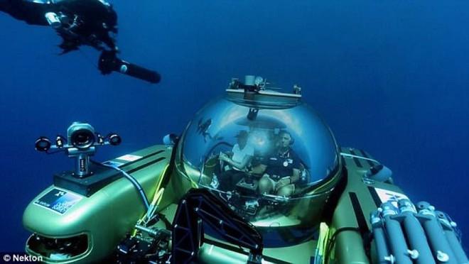 Bí ẩn sinh vật tại đáy biển Bermuda: Giới khoa học chưa từng thấy bao giờ - Ảnh 4.