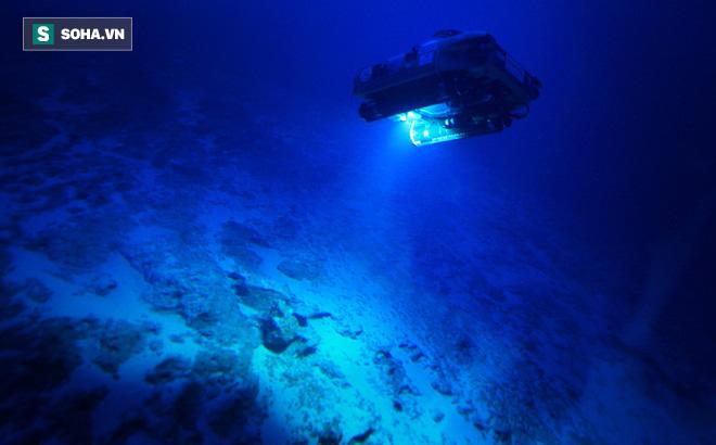 Bí ẩn sinh vật tại đáy biển Bermuda: Giới khoa học chưa từng thấy bao giờ
