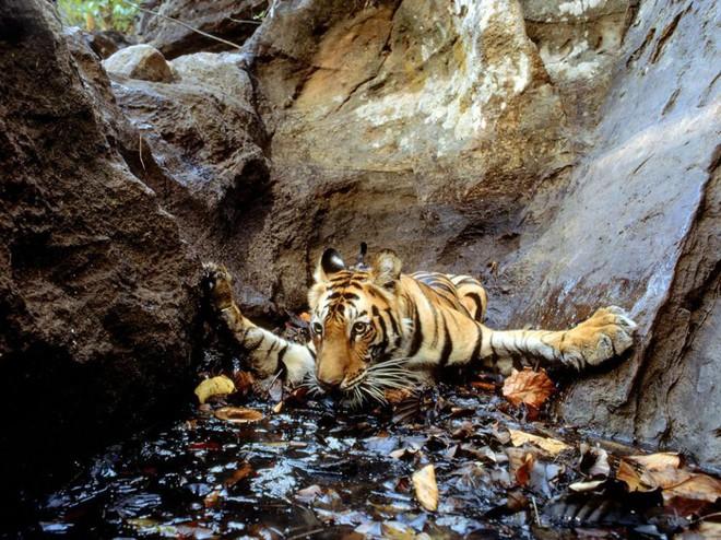 Công bố 9 bức ảnh làm nên lịch sử 130 năm của tạp chí lừng danh National Geographic - Ảnh 6.