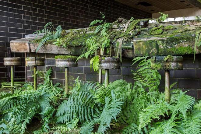 10 lần thiên nhiên biến những nơi bị bỏ hoang thành tác phẩm siêu thực - Ảnh 5.