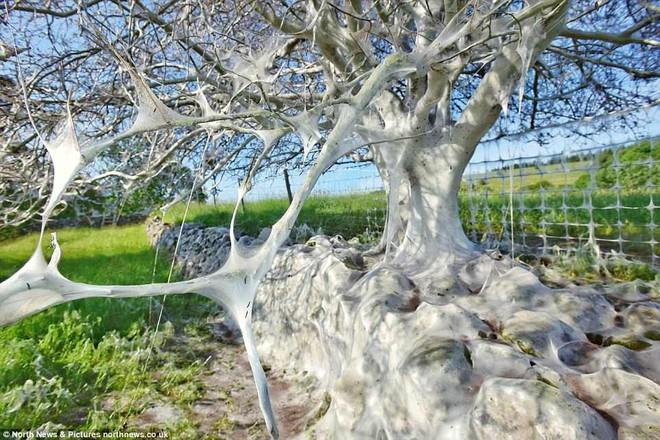 Cái cây kỳ lạ bên bờ sông nước Anh, không bệnh tật nhưng toàn thân hóa màu trắng muốt - Ảnh 3.