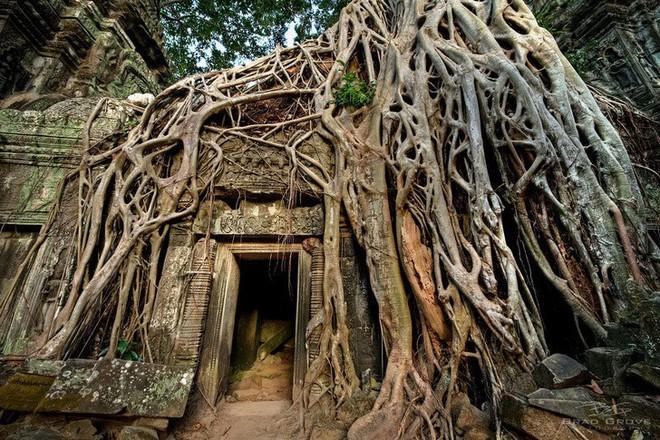 10 lần thiên nhiên biến những nơi bị bỏ hoang thành tác phẩm siêu thực - Ảnh 7.