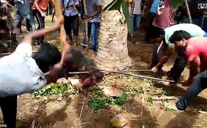 Gấu mò vào làng tấn công, gây thương vong lớn cho người dân