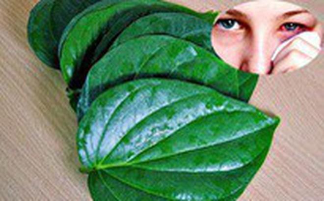 Dùng lá trầu không để xông khi đau mắt đỏ: Cẩn thận bệnh nặng càng thêm nặng!