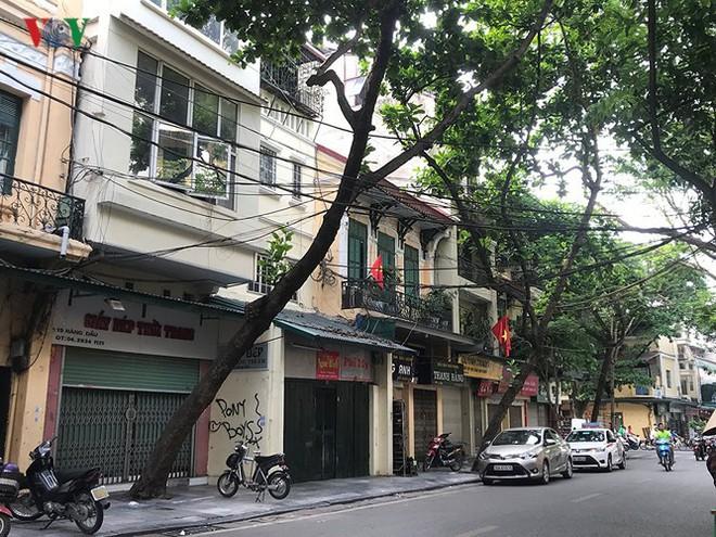Hiểm họa từ cây xanh có nguy cơ gãy đổ trong mùa mưa bão - Ảnh 2.